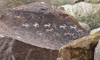 Petroglyphs in Grapevine Canyon