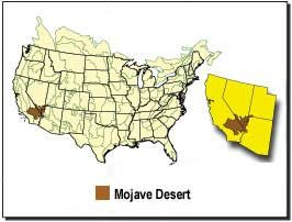 The Mojave Desert DesertUSA - Map of deserts in the us