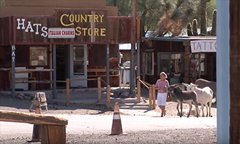 Wild Burros in Oatman