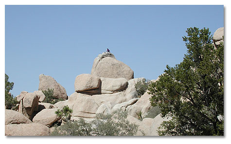 Joshua Tree National Park Rules And Regulations For Resource