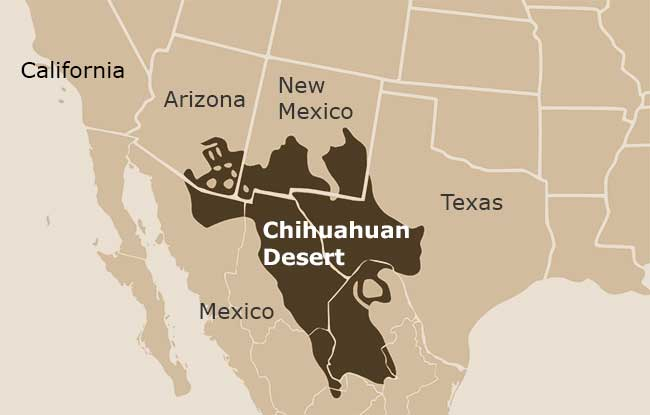 Chihuahuan Desert DesertUSA - Sonoran desert on us map