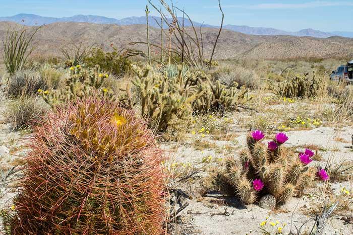 Image result for pics  desert