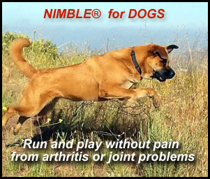Nimble for dogs