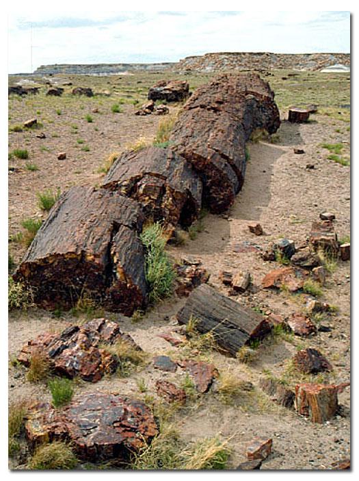 Petrified Forest National Park Description Desertusa